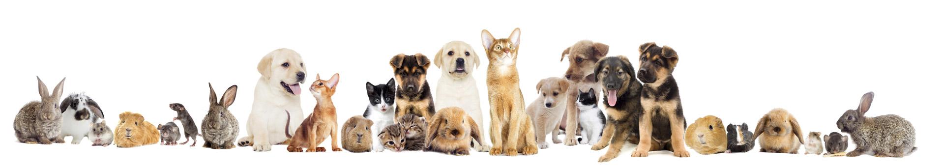 Populaire Services pour animaux domestiques à Montpellier | S.A.D  ZV54