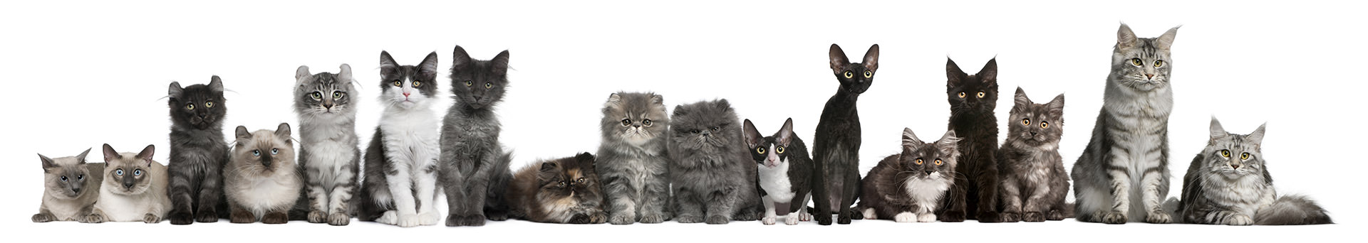 pension pour chat Montpellier, pension féline Montpellier, chatterie Montpellier, faire garder son chat Montpellier